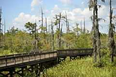 Recovering from severe flooding earlier in 2015-2016 (holdit.) Tags: tx texas visitorcenter swamp nature natural
