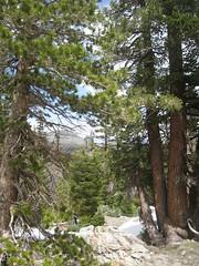 201607_0033 (GSEC) Tags: anseladamswilderness california ferncreek fernlake inyonationalforest sierranevadamountains unitedstates