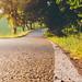 Golden+Road