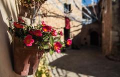HAPINESS (Rober1000x) Tags: europa europe 2016 verano summer mallorca isla islas baleares deya deia town village historic architecture mountain flower sun shadow pot palma