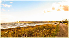 A beautiful place to walk (Brenda Boisvert ..) Tags: boundarybay delta canada mybackyard ocean dike grass beach natural nature unspoiled low tide pacificflyway migrationroute autumncolour