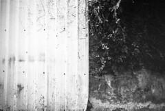 Two-tone - Fuji Neopan 400 (emulsivefilm) Tags: 2016january 35mmformatfilm blackandwhitefilm emulsivedailyphoto fuji fujineopan400 iso200 iso400 iso800 pushingfilm