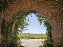Brick Bridge (enneafive) Tags: bridge antique old cornfield blue red brick green olympus em5 omd ivy railway arch