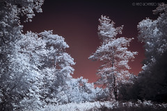 Alien Planet (vincenzzo) Tags: 2016 720nm canada copyrightvincegiovinazzo2016 ir nikon ontario vincenzzo alien bushes infrared light planet trees