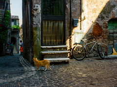 _DSC7116 (Giuseppe Cocchieri) Tags: street strada cat gatto gatti cats colore colori colour allaperto nikon nikkor light luce ombra shadow t