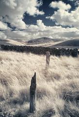 Stake with a view (Scotty Rae) Tags: infrared ir clouds cumulus wall post hills grass moor moorland scotland pentlandhillsregionalpark pentlands stake falsecolourinfrared