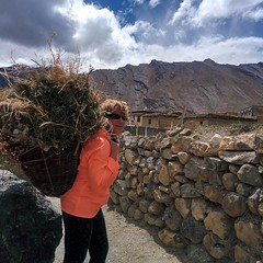 GrassBasket which #Woman (theescapetravel) Tags: leh ladakh memories explore culture yourself moments travel instatravel travelgram tourist tourism vacation traveling trip incredible india escapewithus