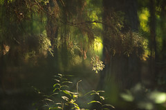 Lost world (Tammy Schild) Tags: helios nature forest woods trees morning branches light green