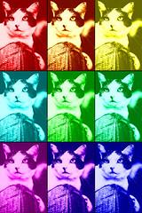Multicolor cat -[ HSS ]- (Carbon Arc) Tags: cat feline furrball fuzzball face color colour array sliderssunday sofa couch armrest nikcollection colorefexpro