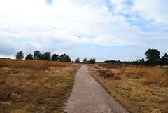 Rozendaal en omg 161001 120 (KB3680) Tags: heide rozendaal gelderland nederland veluwe veluwezoom nationaalpark