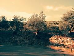 Campagna #countryside #sun #summer #autumn #tuscany #olive #nature #sky #landscape (Leonardo Roina) Tags: landscape summer nature autumn countryside olive sun sky tuscany