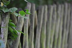 Trellis-Work Fence (derNubo) Tags: plant berlin fence germany nikon europe nikond3 fencefriday trellisworkfence