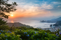 My Town - from Hydrangea Hills (-TommyTsutsui- [nextBlessing]) Tags: blue sunset sea sky orange seascape flower green nature rock japan clouds port landscape nikon dusk tide scenic shore hydrangea       islet izu earlysummer     matsuzaki countrytown sigma1750  onsalegettyimages