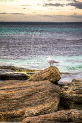Sentinal (.Stephen..Brennan.) Tags: seascape bird rocks seagull augusta hdr waterscape 70mm pentaxk7