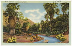 Palm Springs, Canyon, California (Boston Public Library) Tags: california postcards valleys tichnorbrothers