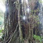 Cagar Alam, Pangandaran thumbnail