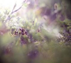 Secret Life (Katelyn Kenderdine) Tags: lighting new summer sun color beach canon vintage 50mm weeds bright 14 jersey streaks brigantine katelyn kenderdine