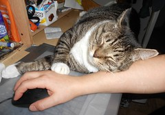 Elvis tries to get his paws on my mouse! (ziggywiggy1(SHELLIE B.)) Tags: catnipaddicts