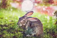 IMG_4220 (hobopeeba) Tags: light snow tree rabbit bunny water pool grass leaves rose fairytale garden drops jump hare bokeh newyear canon50mm12 5dmarkiii