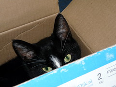 Elliot in the box (Judy **) Tags: cat eyes kat box ogen 2012 doos kittyschoice