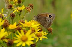 Warwickshire Widllife Trust - Creating a Living Landscape (Warwickshire Wildlife Trust) Tags: nature wildlife conservation coventry warwickshire solihull brandonmarsh