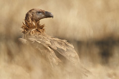 Mencin: Una mirada (Fundacin Caja Mediterrneo) Tags: naturaleza photography mediterraneo photographer wildlife cam caja fotografia obrasocial fotocam