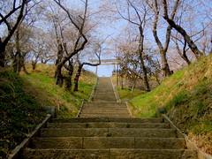Ishinomaki Hiyoriyama park stairs (Germn Vogel) Tags: park tree japan stairs gate asia hill bloom sakura tori miyagi tohoku eastasia hiyoriyama ishinomaki