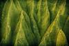 Cathedrals (Matt Daugherty) Tags: nature hawaii crossville mattdaugherty dpsgreen