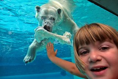 Lilly (MPBecker) Tags: bear park blue chicago water smile canon happy zoo kid child tank exhibit powershot il lincoln polar s95