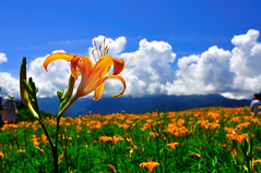 Lily flower  @ (Vincent_Ting) Tags: sky star taiwan daylily  formosa  sunrays  milkyway hualian    hemerocallisfulva       clousd   starstrails