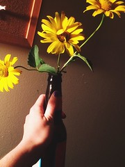 Glass Half Full (ColdKidCoco) Tags: shadows contrast stark yellow flowers sunflowers