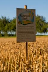 DSC_1202 (Marlon Fried) Tags: bokeh getreide cereals weizen wheat field crops grain