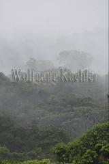 60071623 (wolfgangkaehler) Tags: 2016 southamerica southamerican ecuador ecuadorian latinamerica latinamerican rionapo rionapoecuador rionaporiver rainforest coca cocaecuador laselvalodge observationtower trees rainforestcanopy mist rising landscape scenery scenic