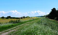 The Falster dike with wild flowers (Lars Plougmann) Tags: denmark falster wildflowers flowers dike bench vggerlse regionzealand dk dscf3601