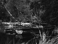 (Christian Gttner) Tags: blackandwhite bw baum bokeh schwarzweis schwarzweisfotografie sw svartvitt summer sverige boot birke natur nature natura monochrome mediumformat mittelformat moerschecodeveloper outdoor analog schweden szwecja sweden analogue kamera kodak kodak400tx krajobraz landschaft landscapes lato landscape film forest gras grass grs licht light wasser water wald europa etrs ecodeveloper rollfilm zenzabronica umwelt odbicie spiegelung drzewo 6x45 czarnobiale camera reflection 120