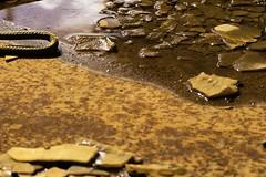 Tonneau rouillé (Sarah Devaux) Tags: tonneau rouille eau croupie corde noeud extérieur bassin à flots base sousmarine bordeaux port marina oxyde de fer rope knot rust barrel orange