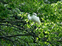 Bayard Cutting Fields Arboretum (79) (pensivelaw1) Tags: suffolkcounty newyorkstate longisland bayardcuttingarboretumstatepark