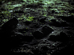 Far from your consideration (Kevin STRAGLIATI) Tags: stone france plant cave dark green nature ground rock