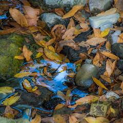 QUELQUE-CHOSE DE L'AUTOMNE (zventure,) Tags: carr cach cailloux couleurs automne feuilles extrieur eau eaudouce mare galets pond