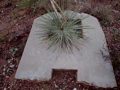 Yucca and A-shaped concrete slab (EllenJo) Tags: pentaxqs1 pentax august 2016 ellenjoroberts ellenjo yucca onthehill verdevalley clarkdale lowertown beneaththepool intheneighborhood august24 az arizona