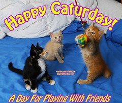 Happy Caturday! (youtube.com/utahactor) Tags: kittens gingerkittiesfour ginger cats friendsofzeusandphoebe tabby tabbies tuxedo gata gato chats chatons cute adorable precious playing toys yellow red orange striped youtube videos watch spots spotted cream blonde whiskers pink nose eyes