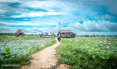 Lotus Farm (sachasplasher) Tags: girl child walking walks walk cloud clouds sky lotus lily farm footpath path asia cambodia bamboo hut