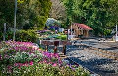 20160925-003-D72 - Spring Bluff Station_HDR-Flickr.jpg (Brian Dean) Tags: caravanning toowoomba flowershow tour toowoomberflowershow