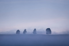 The Four (ChrisDale) Tags: chrisdale chrismdale cloud dawn fog haze hudswell inversion landscape marske mist morning northyorkshire northyorkshiredales richmond sunrise swaledale trees yorkshiredales