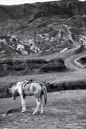 Mountain Horse (IR + B&W)
