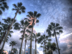 Weeping Palm Trees (Ryan Chanatry) Tags: singapore olympus palmtrees handheld hdr omd 1250mm em5 5xp
