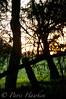 untitled-0331.jpg (ncdjsncncuinwcis) Tags: summer sunlight landscapes bush australia margaretriver westernaustralia techniques smalldof