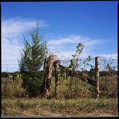 . (Ansel Olson) Tags: sky 120 6x6 mamiya tlr film fence mediumformat virginia wire fuji slide provia 100f c330 c330s mamiyasekor80mmf28