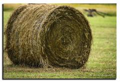 HAYBALE (vicki127.) Tags: field grass cheshire canon300d vicki haybale styal burrows digitalcameraclub flickraward ilovemypics handplough ringexcellence lightroom4 vicki127 adobephotoshopcs6