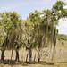I curiosi alberi